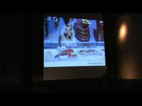 Pecha Kucha Vol.11: 11 maneras de fotografiar un perro embalsamado
