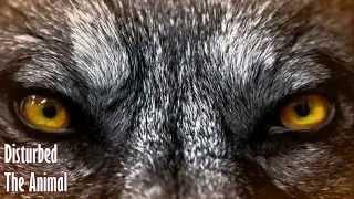 download lagu Disturbed - The Animal Legendado Br gratis