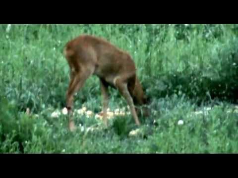 Lov na srnjaka 2010/Roebuck hunting 2010