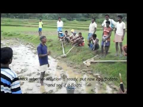 Kharif Paddy Stabilisation in Jharkhand