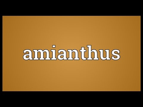 Header of amianthus