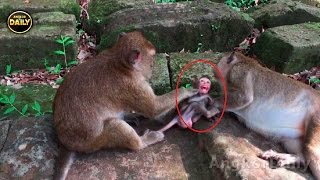 Hot News Today!! Lovely Cute Baby Monkey is ....[Angkor Daily 278]