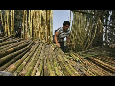 Sugar Mills In Uttar Pradesh Threaten Shut Down, Demand Clarity In Pricing