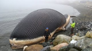 Biggest Animals Ever Lived on Earth