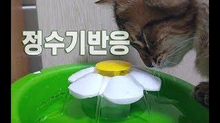 호기심과 의심많은 아깽이들의 정수기 반응! 귀여운고양이들동영상