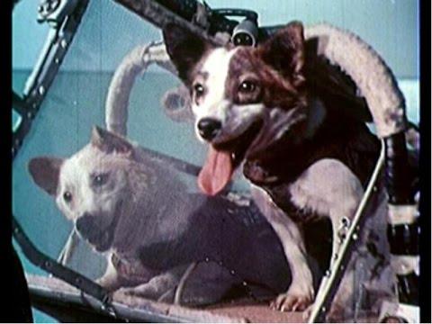 Животные в космосе. Animals in Space.