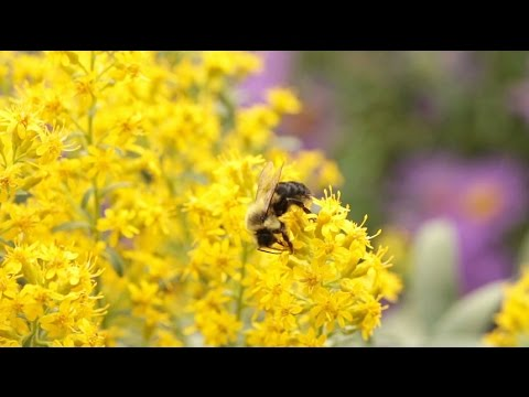 Neonicotinoids: The New DDT?
