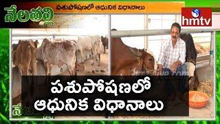 Dairy Farming Guide and Tips By Successful Farmer Rama Linga Raju | Nela Talli | hmtv