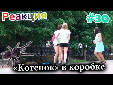 Котенок в Коробке / Meowing Spider Prank (Реакция 30)