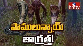 Beware of Snakes | hmtv Special Story on Snakes | hmtv