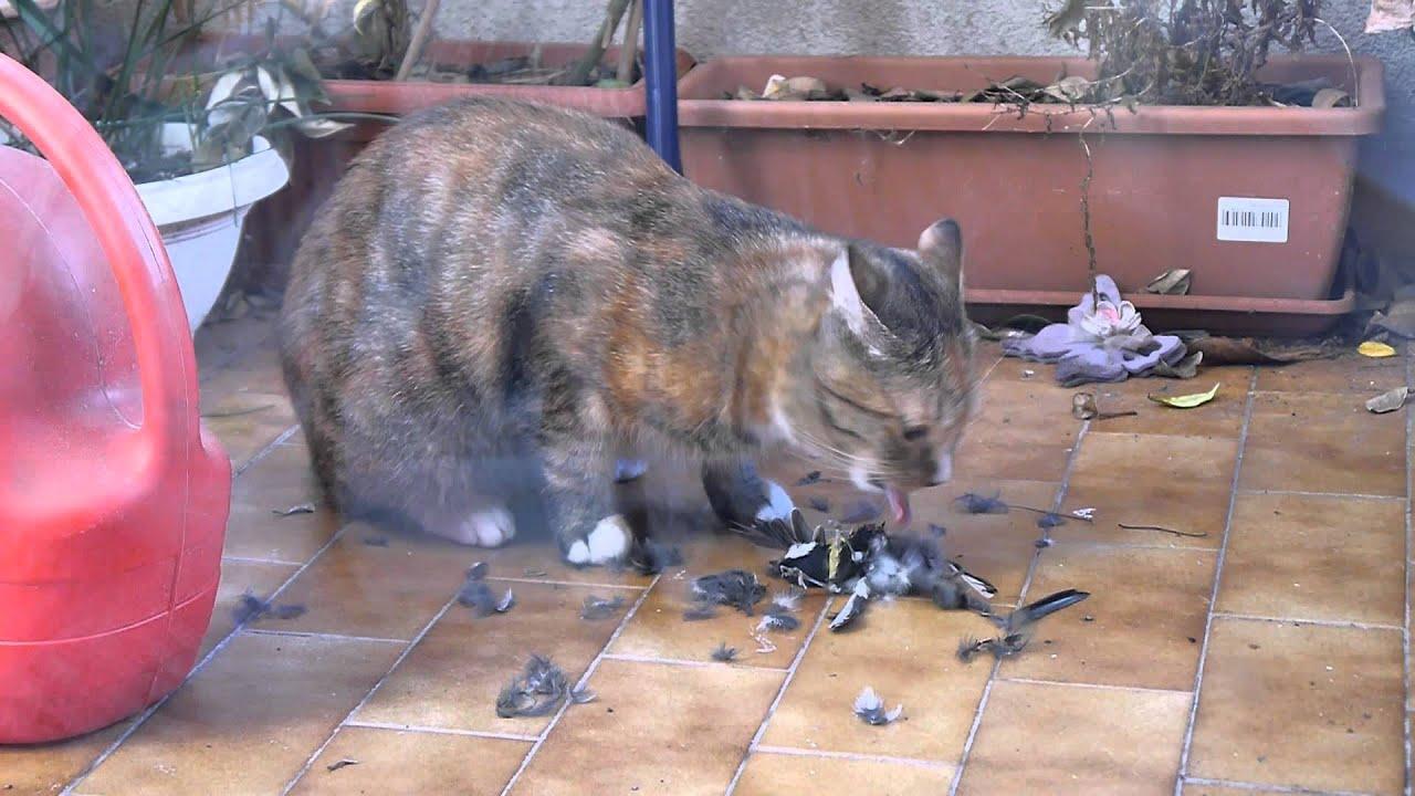 Cat Hunt Catch Kill Eat