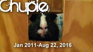 A Squeaky Life: Remembering Chupie