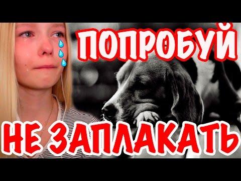ПОПРОБУЙ НЕ ЗАПЛАКАТЬ ЧЕЛЛЕНДЖ | TRY NOT TO CRY CHALLENGE