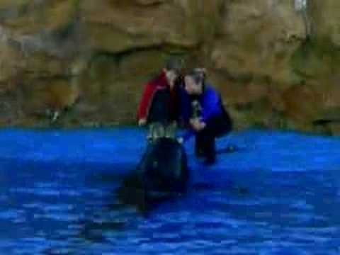 Seaworld ~ Woman falls into Water!