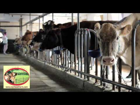 Raw Milk Farm - Eastleigh Farm - Framingham, MA, 01701 - Community Supported Agriculture (CSA)