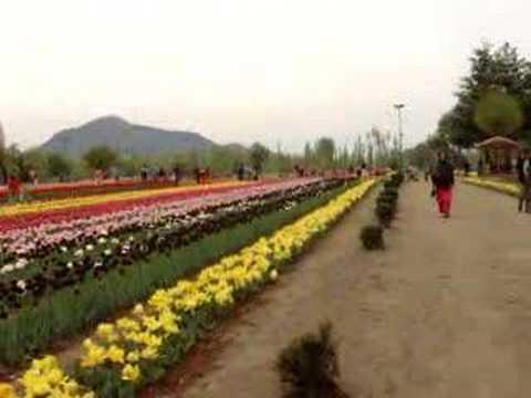 Tulip Gardens Srinagar