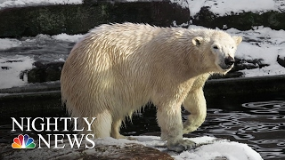 2016 Was Hottest Year Ever: What's Behind The Numbers? | NBC Nightly News