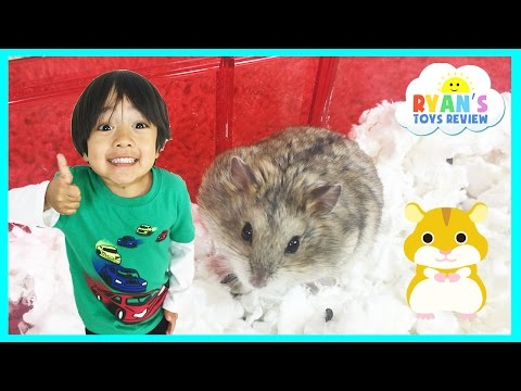 Ryan ToysReview first pet Buying Hamster from PetSmart Family Fun Trip animal toys Kids Video