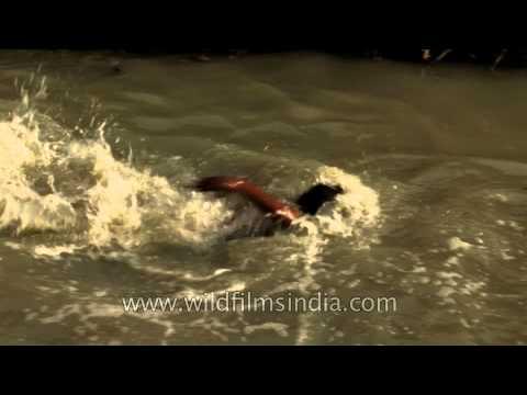 Delhi rag picker boys enjoy an afternoon splash in water