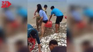 3 tấn cá mạu bơi gần bờ, ngư dân Hà Tĩnh bắt mỏi tay