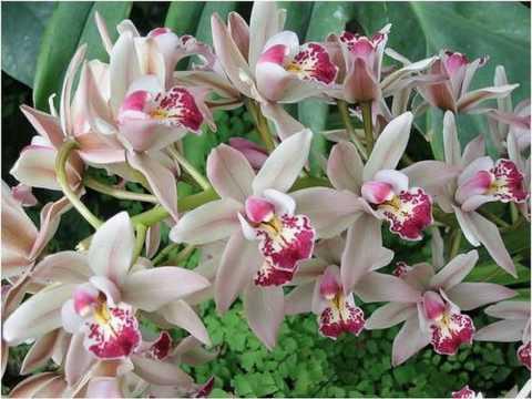 Orquideas & Cores