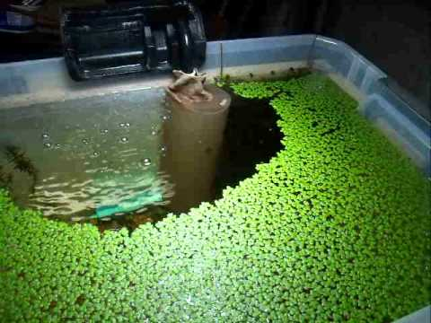 Diy strainer for intake of aquarium filter youtube for Diy pond cleaner