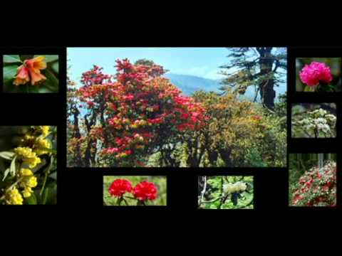 Kingdom of Bhutan | Bhutan Travel | In Harmony With Nature | Himalayan Wonders