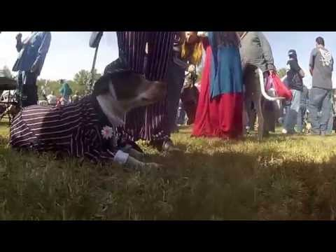 A Dog's Eye View: Woofstock 2014