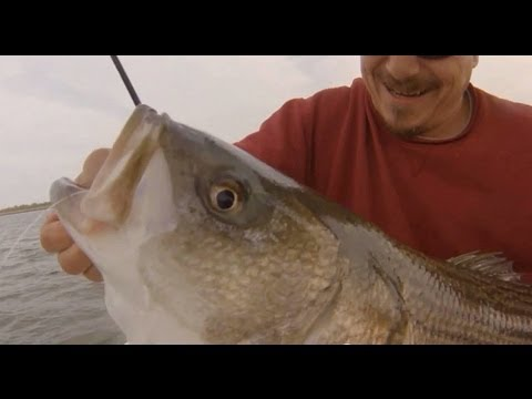 Striped Bass Basics. How to catch BIG NY,NJ STRIPERS!-TEAM OLD SCHOOL. ACCURATE FURY!