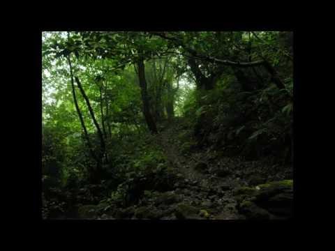 Sounds Of Rain - Stereo binaural - 5+ Hour - No Loops! - [hd] video