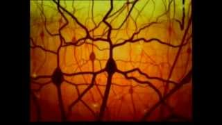 Le Miracle Du Cerveau