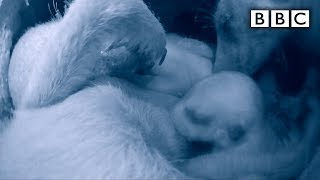 Extraordinary Footage of Baby Meerkats  - Animals With Cameras Episode 1 | BBC One