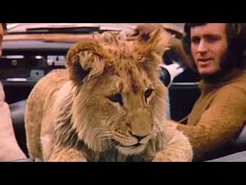 A Lion Called Christian   The Whole Documentary Full Length