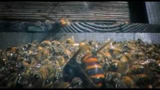 30 Japanese Giant Hornets kill 30,000 Honey Bees