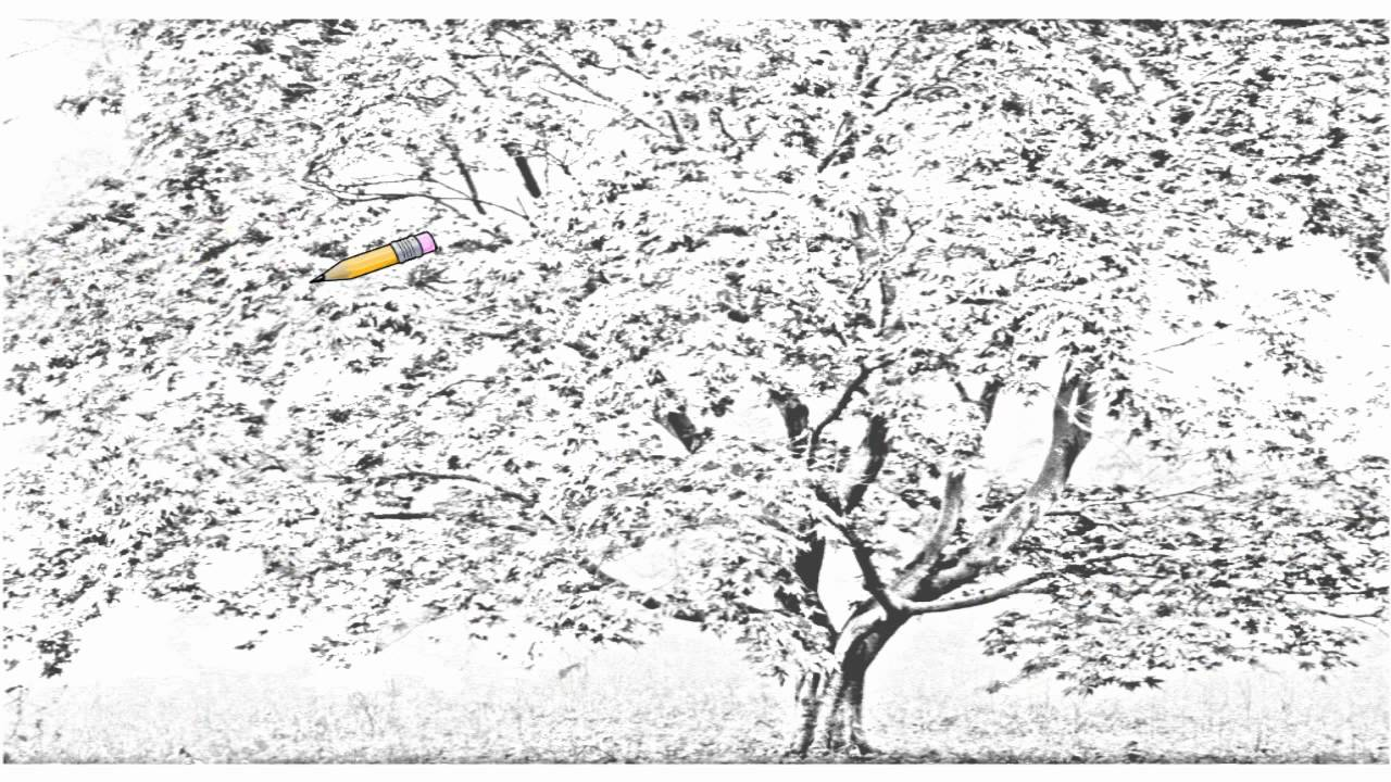 Cherry Blossom Drawing Black And White Auto Draw 2 Cherry Blossom