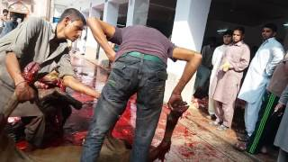 Eid ul Azha 2016 Jamia Naeemia Gharhi Shahu Lahore.