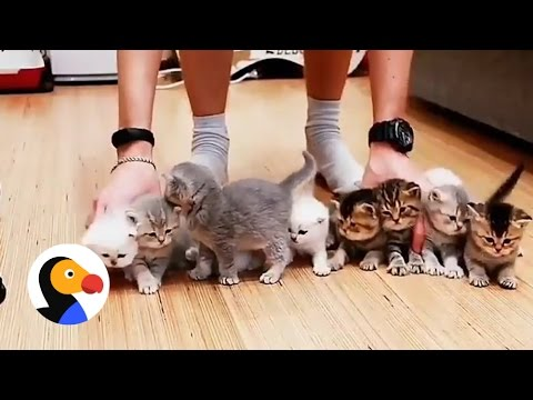 Adorable Kittens Won't Sit Still For This Picture | The Dodo