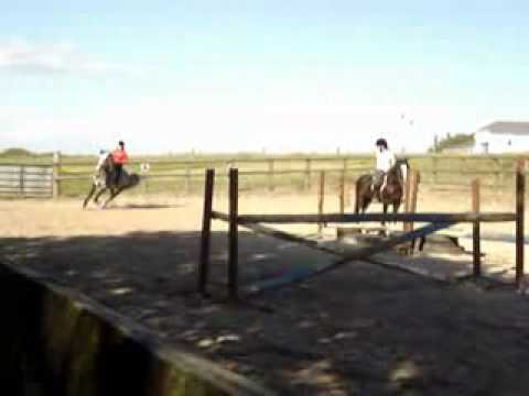 Best horse video ever!!!