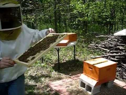 backyard beekeeping part 7 s1 e7 hive inspection youtube