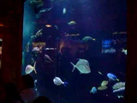 Aquarium in Caesars Palace Las Vegas April 2006