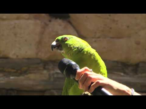 Parrot Sings Seven Songs at Disney World