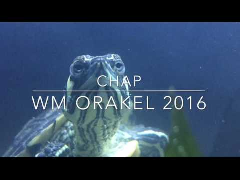 #knorakel Schildkröte Chap Kirchbarkau