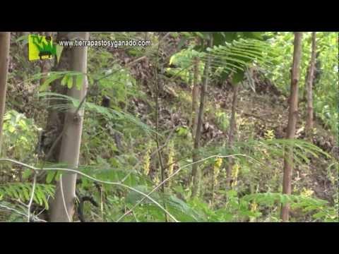 Tierra Pastos y Ganado Potrerización y Cable Vía Sept29