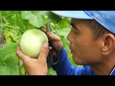 台綜-農夫與他的田-20190125 15度甜蜜的家園