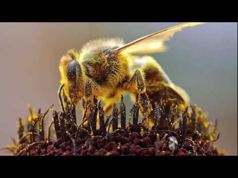 Science in Action: Honey Bee Health | California Academy of Sciences