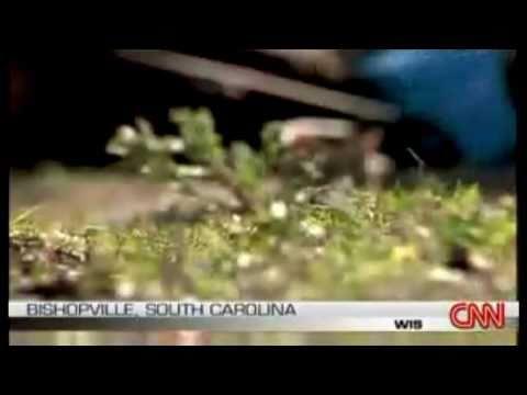 Lizard Man On The Loose South Carolina