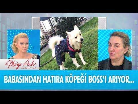 Babasından hatıra kalan köpeği Boss'u arıyor - Müge Anlı İle Tatlı Sert 4 Ocak 2018