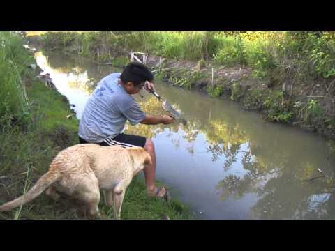 Pesca de Traíras na Superfície 9: Jackall Bros Bonnie