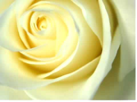 Deborah Conway - White Roses