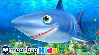 Shark Song | Little Baby Bum Junior | Kids Songs | LBB Junior | Songs for Kids
